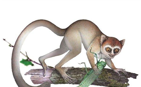 Kolébka vyšších primátů se přesunula do Asie
