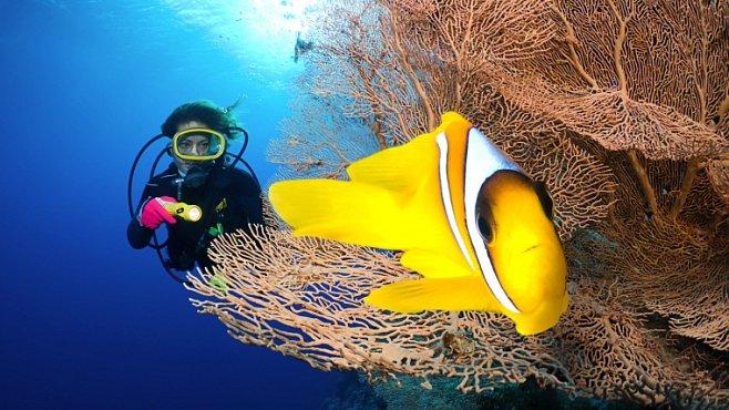 Virtuální potápění v moři nabídne Google. Zbude nějaký důvod jezdit k moři?