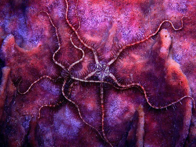Hadice na mořské houbě.