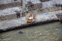Dvojice zvědavých makaků si prohlíží odhozenou plastovou láhev před chrámem Pašupatináth v nepálském Káthmándú.