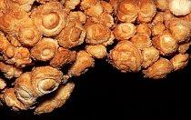 Strop v Proškově dómu je pokrytý unikátní výzdobou nazývanou Koněpruské růžice, ve které se střídají vrstvy kalcitu s tenkými vrstvičkami chalcedonu.