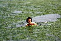 Mořská řasa sice není zdraví škodlivá, ale přeci jenom plavat v čisté vodě je příjemnější.
