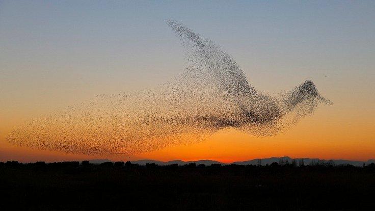 Tisíce špačků předvedly úchvatnou podívanou na španělském pobřeží Costa Brava, kdy se v jednu chvíli proměnily v obrovského ptáka.