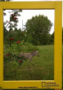 7. místo: Zebra :-) (Renata Starečková)