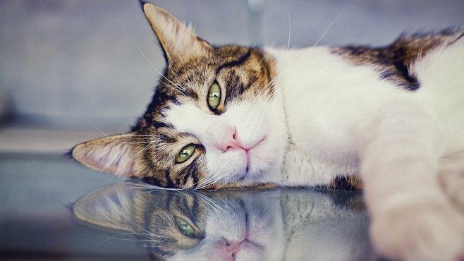 Kočky ročně zabijí miliardy ptáků a jiných zvířat. Podceňovali jsme je, jsou velkými lovci