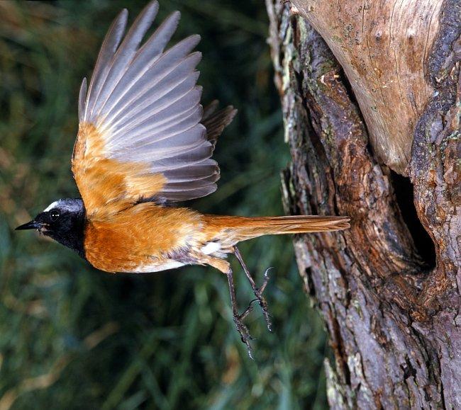 """Stromy jsou úkrytem pro velkou většinu ptáků. Jsou-li ohroženy stromy, tak jsou na tom podobně i jejich \""""nájemníci\""""."""