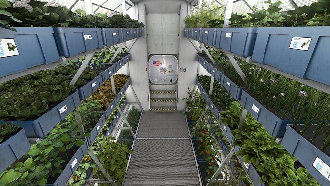 Kromě nutričních benefitů by mohlo pěstování a konzumace čerstvé zeleniny ve vesmíru mít také vliv na dobrou náladu astronautů.