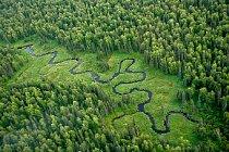 Na leteckém snímku malé říčky v zelené aljašské tajze jsou krásně vidět její klikatící se meandry čili zákruty.