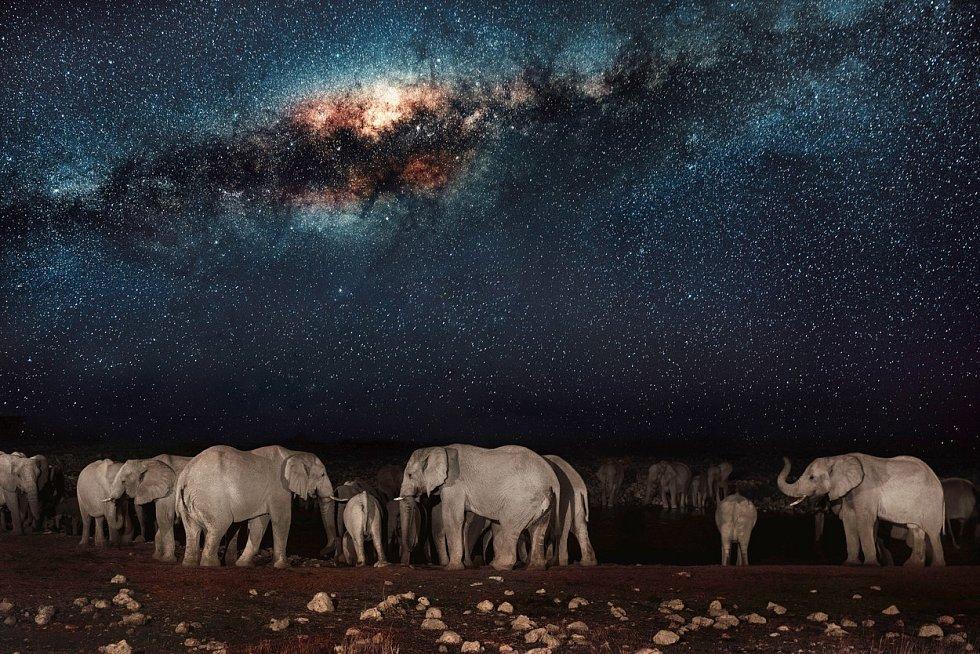 Dechberoucí spojení - Mléčná dráha na obloze a stádo slonů, které se uprostřed noci přišlo osvěžit ke zdroji vody v africké Namibii.