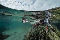 Mladý kormorán modrooký se možná poprvé zkouší potápět nedaleko pobřeží. Na březích Antarktického poloostrova hnízdí nebo hledá potravu mnoho mořských ptáků.