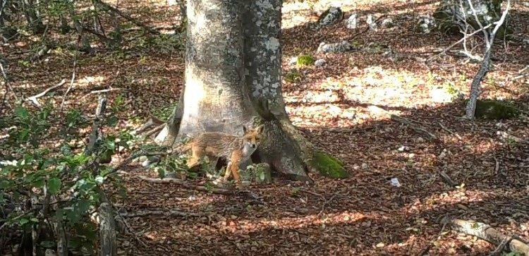 V rozlehlých lesích Národního parku Abruzzo žije na 40 druhů savců, 30 druhů plazů a 300 druhů ptáků.