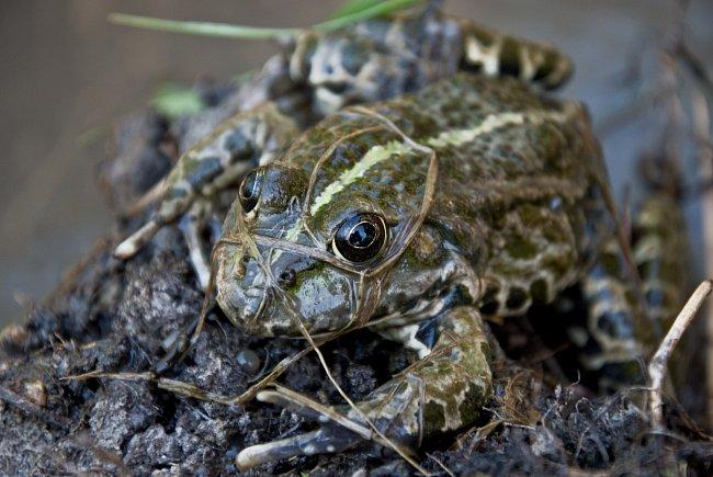 Na světě žije více než 6 000 druhů žab.