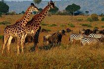 V Africe najdete mnoho zvířat na jednom místě aniž by vznikaly jakékoli konflikty.