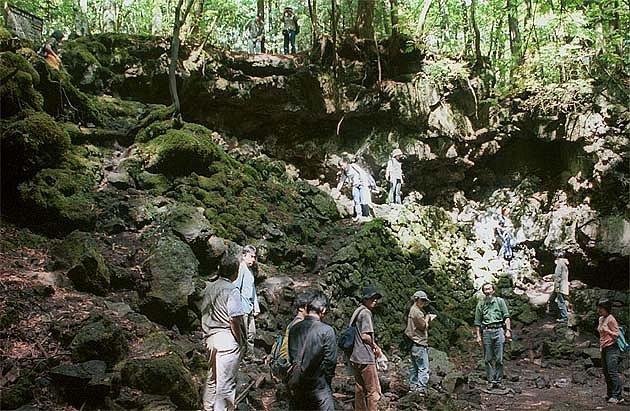 Kromě sebevrahů míří do lesa i spousty normálních návštěvníků.