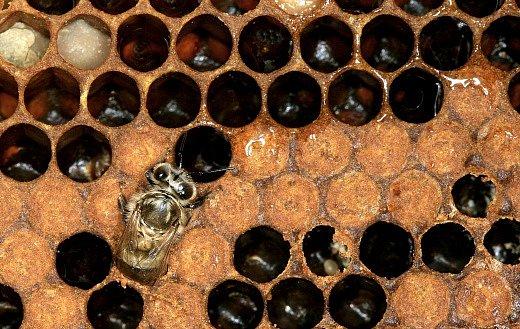 Koho by napadlo, že prvních 21 dní v životě včely bude tak krásných..?
