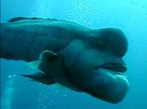 Nejdivnější ryba na světě