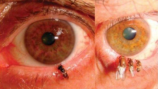 Včely v Asii začaly pít lidské slzy. Evoluce v přímém přenosu