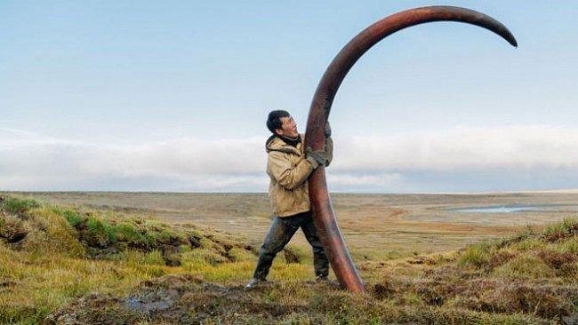 O mamutech a lidech, kteří dnes žijí z jejich klů