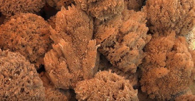 Mořské houby