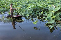 Vietnam plný lotosů