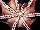 VIDEO: Boj na život a na smrt. Chobotnice proti lachtanovi