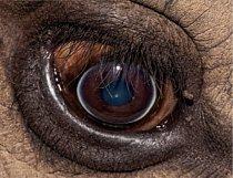 9. Čí jsou to oči?  a) hroch obojživelný b) kočka domácí c) nosorožec tuponosý