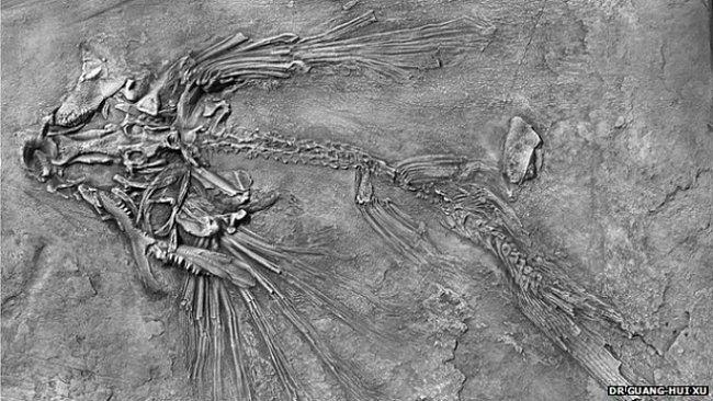 Létající ryby plachtily vzduchem v Číně. Před 200 miliony lety