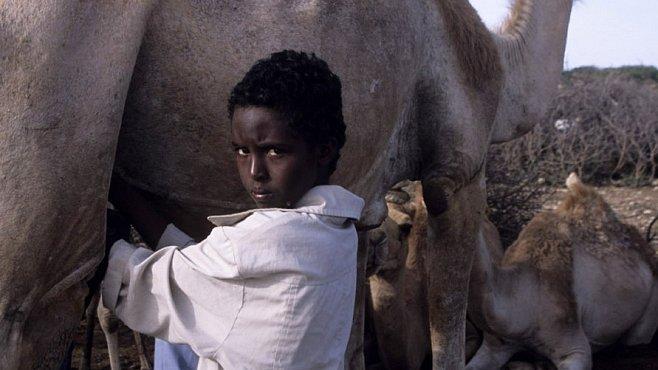 Bohatství nomádů aneb když se mi před očima narodí velbloudě