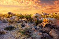 Mohavská poušť