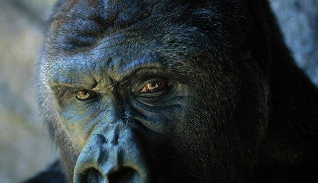 125. výročí existence National Geographic oslavujeme i výstavou v PALLADIU