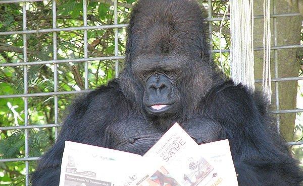 Gorila, která se naučila mluvit