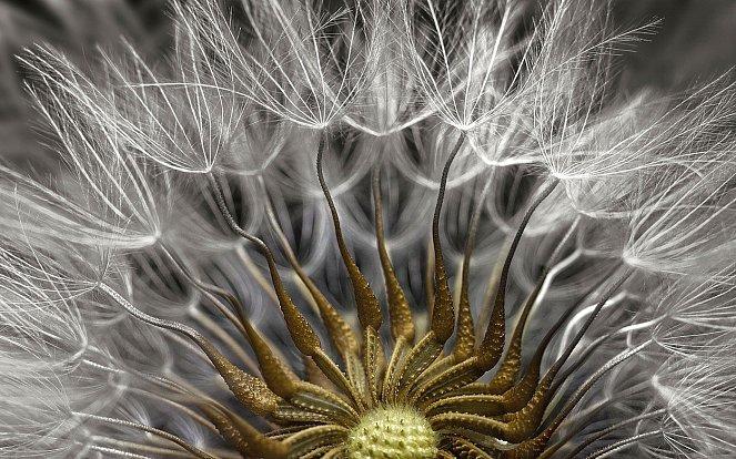 Nejlepší mikroskopické fotografie