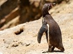 NG Channel: Tučňáci v poušti