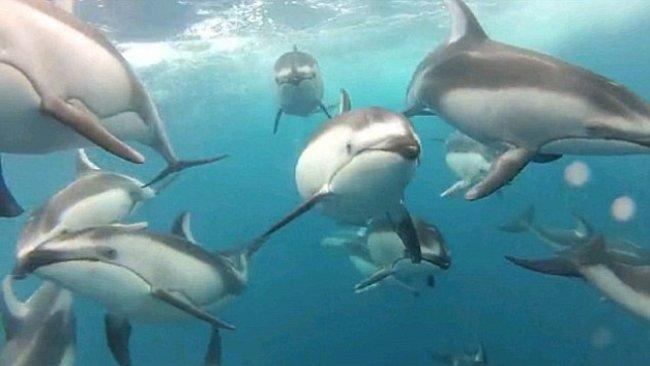 VIDEO: Delfíni v akci. Ohromující záběry podvodní kamery