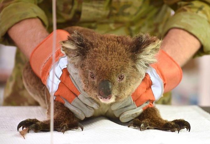 Vprovizorní veterinární nemocnici se proměnil park Kangaroo Island Wildlife.