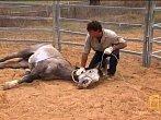 Takhle se krotí divoký kůň