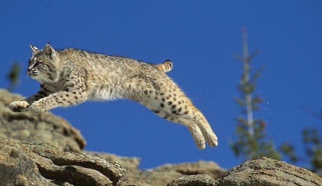OBRAZEM: Když se medvěd nebo levhart pokoušejí létat