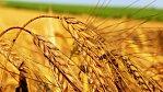 Dostupná půda uživí klidně 10 miliard lidí, tvrdí studie