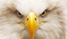 Zapomeňte na všechno! Sledujte on-line kameru v orlím hnízdě