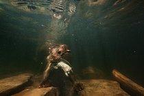 Na Britských ostrovech žije jen jeden druh vydry - Lutra lutra, euroasijská vydra, která je doma stejně v moři jako v sladké vodě.