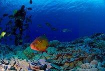 Podmořský svět u ostrovů nebyl dosud pořádně prozkoumán.