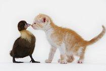 Kitten and Fledgling