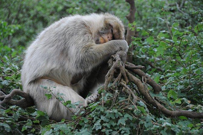 I zvířata ráda spí...