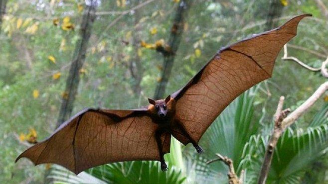 Záhadný africký virus podobný SARS je spojen s netopýry, myslí si lékaři