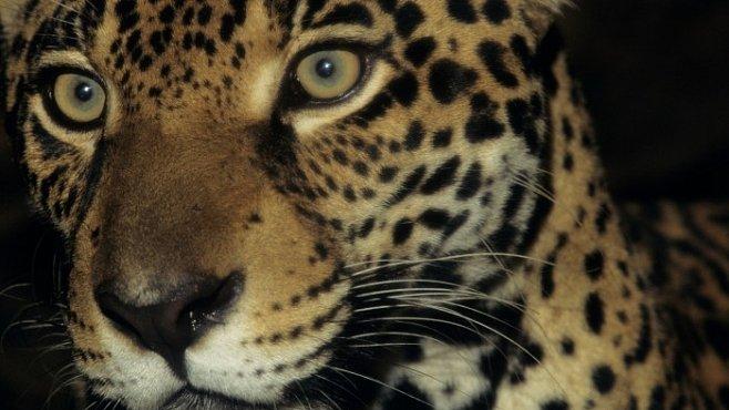 Klonování ohrožených zvířat se možná stane realitou. V Brazílii se o to pokusí skupina vědců