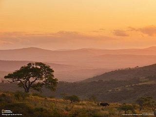 Nosorožec na úpatí kopce