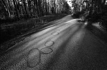 7. června 1988 bílí rasisté připoutali Afroameričana Jamese Byrda ml. k dodávce a vlekli ho po této cestě, dokud nezemřel. Kruhy vyznačují místa, kde byly nalezeny části Byrdova těla.