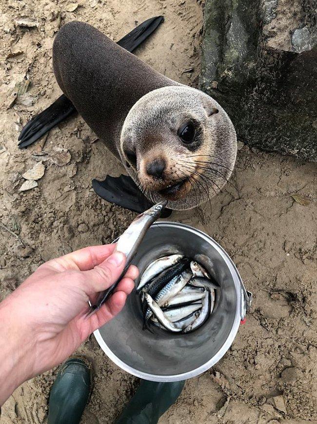 Po příjezdu do nizozemského Safariparku Beekse Bergen se Nelson s chutí pustil do svých oblíbených ryb.