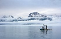 Strmými horami a ledovci uzavřený záliv Prince William Sound na Aljašce se většinu roku halí do deště a mlhy.