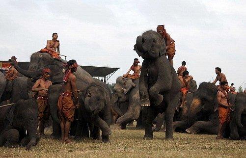 V thajské provincii Surin se sloního festivalu účastní několik stovek slonů.